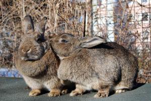 Wie alt werden Kaninchen?